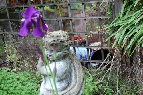 Purple-Iris-1