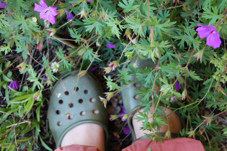 Cranesbill-and-Crocs
