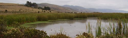 Marshes-at-Limantour