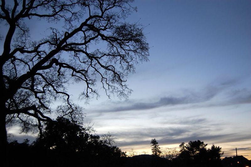 21-Tree-against-sky