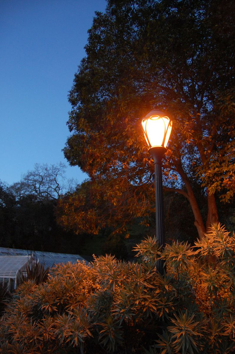 24-lantern