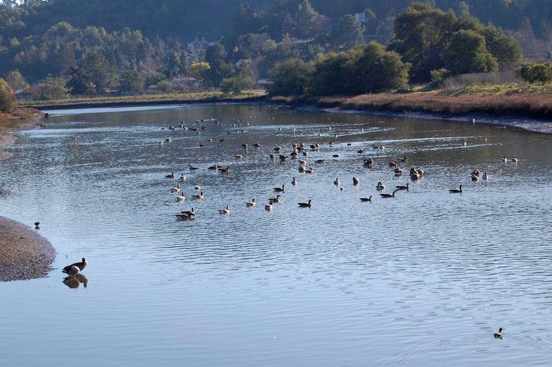 25-ducks