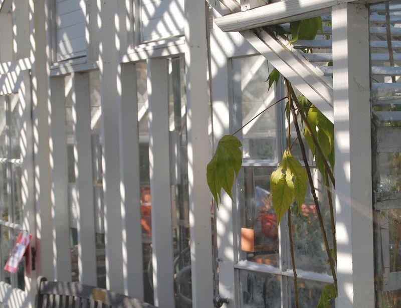 23-greenhouse