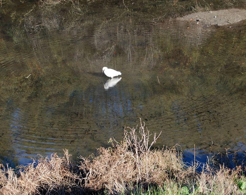 25-egret
