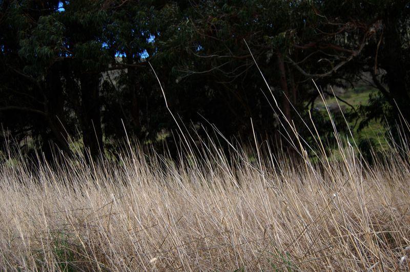 30-Tennessee-Valley-Grass