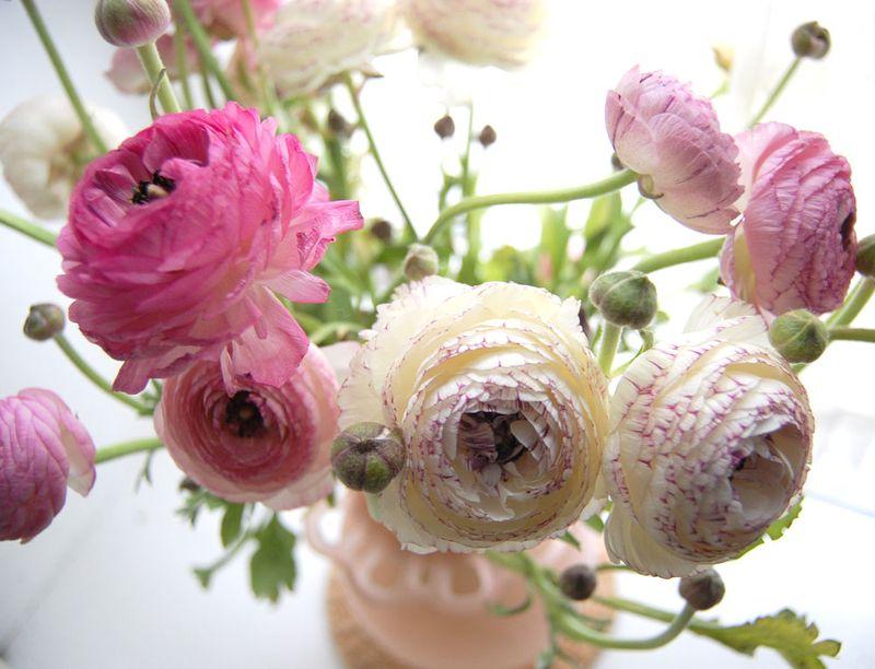 ranunculus flower meaning  flower, Natural flower